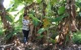Hội Liên hiệp phụ nữ tỉnh:  Tích cực bảo vệ môi trường