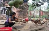 Chị Đinh Thị Huệ: Tích cực lao động để khẳng định bản than