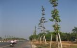 Đề án cải tạo và quản lý cây xanh đô thị Thủ Dầu Một:  Vì một đô thị xanh