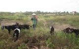 Quyết tâm làm giàu của một nữ nhà nông trẻ
