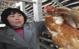 Lo ngại nguy cơ H7N9 biến dị lây từ người sang người