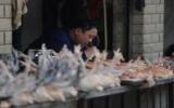 Giới khoa học quan ngại cúm H7N9 gây ra đại dịch