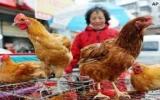 Công bố 1 phát hiện mới về virus cúm gia cầm H7N9