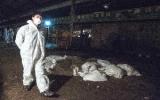LHQ đưa khuyến nghị nhằm ngăn chặn H7N9 lây lan