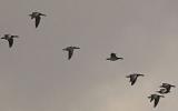 Có thể chim di trú mang virus H7N9 đến Trung Quốc