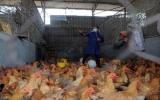 Lại thêm 2 người tử vong do H7N9 tại Trung Quốc