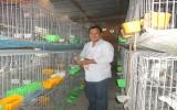 Thành công với trang trại chim bồ câu