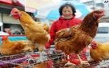 Dịch H7N9 ở Trung Quốc có thể lan xuống phía Nam