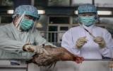 Số ca nhiễm cúm H7N9 tại Trung Quốc liên tục tăng