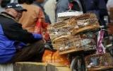 Xác định vật chủ mang virus cúm H7N9 ở Bắc Kinh