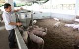 Ứng dụng mô hình chăn nuôi bằng đệm lót sinh học