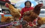 Chống cúm A/H7N9: Phải kiểm soát chặt biên giới Việt - Trung