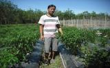 Nông dân trẻ: Chịu khó + kỹ thuật = hiệu quả