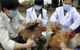 Hỗ trợ các địa phương vaccine phòng, chống dịch cúm gia cầm