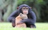 Tình bạn diệu kỳ giữa linh miêu và tinh tinh