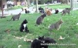 Người phụ nữ làm bạn với 1.000 chú mèo