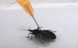 Sùi bọt mép, bất tỉnh vì bị côn trùng cắn