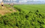 Biển Trung Quốc bị tảo bao phủ gần 29.000km2