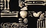 Tác phẩm nghệ thuật từ xương người