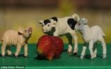 Quả dâu tây có hình chú chuột xinh xắn