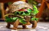 Ngụy trang rùa thành bánh hamburger để qua mặt hải quan