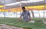 Làm giàu từ trồng rau mầm