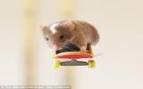 Chuột trượt ván và lướt sóng điêu luyện