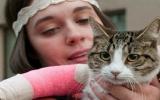 Mèo sống sót kỳ diệu khi rơi từ tầng 11