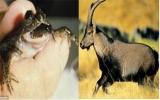 Tái sinh các loài vật tuyệt chủng