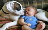 Khoảnh khắc đáng yêu giữa bé và cún