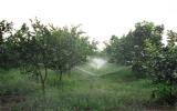 Kinh tế trang trại: Tiềm lực thúc đẩy xây dựng nông thôn mới