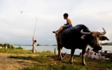 Cá rô đồng mùa gặt