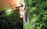 Vườn đứng len lỏi vào nhà Việt