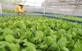 Trồng rau bằng phương pháp thủy canh: Là bảo vệ môi trường