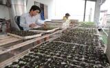 Ô nhiễm môi trường trong sản xuất nông nghiệp: Nguy cơ còn lớn