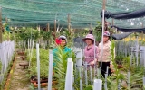 Hoa lan Chánh Phú Hòa tính chuyện… đi xa