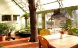 Tạo không gian thiền với cây trong nhà