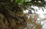"""""""Nhức nhối"""" nạn trộm cát trên sông Đồng Nai"""