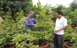 Nông dân xã Thạnh Phước (Tân Uyên): Vươn lên từ cách làm hay