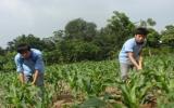Trường Trung cấp Nông Lâm nghiệp Bình Dương: Đào tạo nghề luôn gắn với việc làm