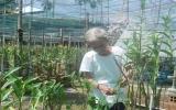 Lão nông Hồ Văn Hoài: Từ mê lan đến làm giàu