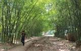 Phú An rợp bóng tre làng