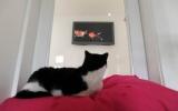 Khách sạn cao cấp cho mèo