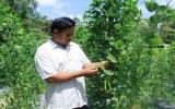 Làm giàu từ trồng rau an toàn