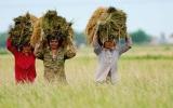 Canada đầu tư hơn 7,6 triệu USD cho nông nghiệp Việt Nam