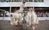 Ca nhiễm virus H7N9 đầu tiên ở Hong Kong