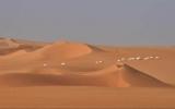 Động vật hoang dã ở Sahara ngày càng ít