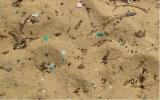 Nhựa gây độc hại đến hệ sinh thái biển