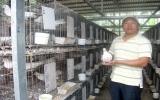 Làm giàu từ nuôi chim bồ câu