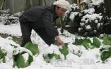 Lào Cai thiệt hại hơn 35 tỷ đồng vì tuyết và sương muối